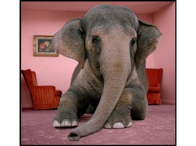 elephant-room11