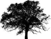 tree witnesses