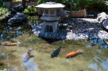Serenity_Koi_Pond_SD_Zoo