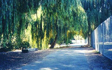 Willow-shaded Union City Trail segment next to schoolyard