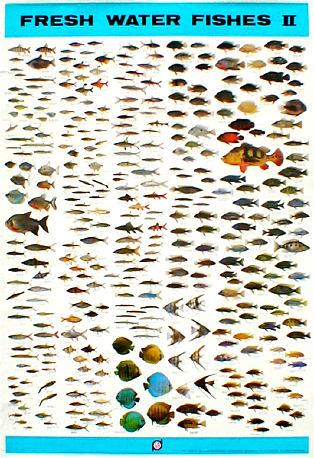 aq-fw-fishes-II