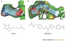 Pseudoreceptor models in drug design pizon bridging ligand- and receptor-based virtual screening