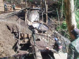 forest destruction for safrole