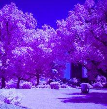 false-color-infrared-photo-of-stevens-campus-john-dryzga