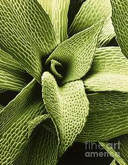 false-color-sem-of-moss-leaves-green-dr-jeremy-burgess
