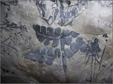 Part of a fossilized rain forest discovered in coal mines in Vermilion County in Illinois.