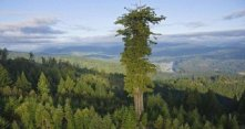 Plan Your Next Big Hike Around These 10 World-Famous Trees