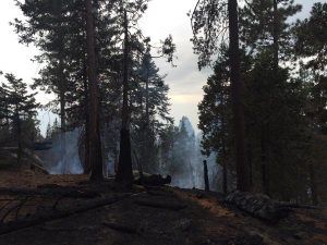 RoughFire still smoldering here at the edge of the Grant Grove giant sequoia forest