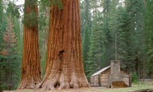Yosemite_Mariposa_Grove_Calif.  closed until april 2017