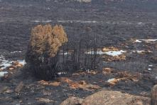 Area blackened in northern tasmania by so-called BUSH racist comin' fire.