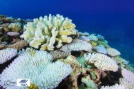 survey complet WA's offshore reefs are not escaping coralbleaching, water temps of 33C