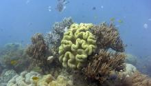great-barrier-reef-coral-bleaching. Ammonian ambers, see. Out rallarite on a nydra hoydyate. geelax woblace.