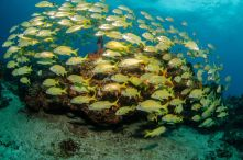 mesoamerican-coral-reef-school-fish_jpg_990x0_q80_crop-smart