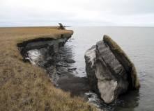 Collapsed permafrost block of coastal tundra on Alaska's Arctic Coast.